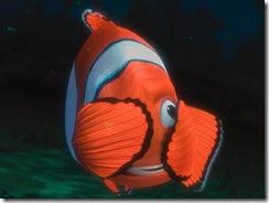 Nemo 11